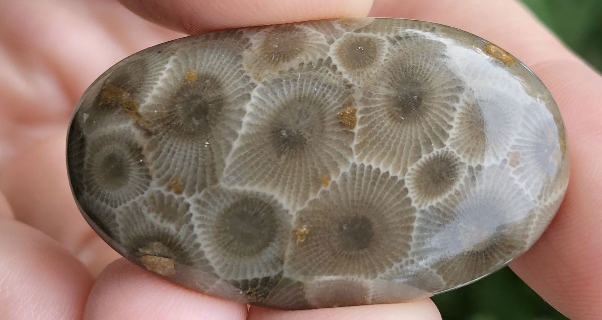 Petoskey Stone Meanings, Properties and Uses