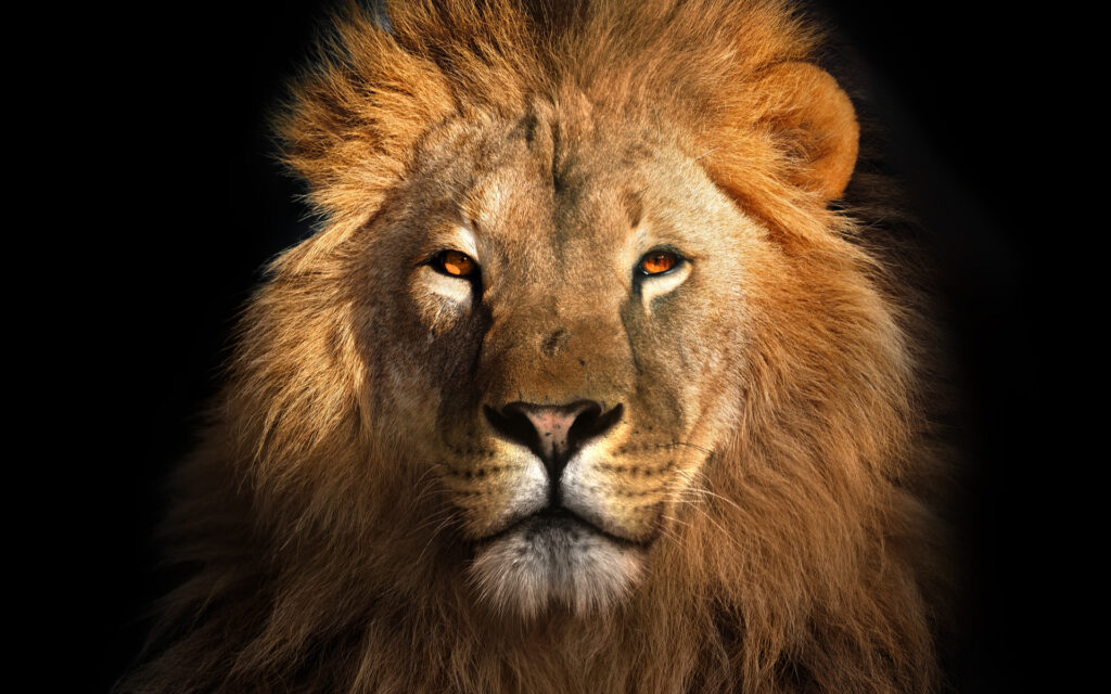 A Complete List of Leo Birthstones and Meanings